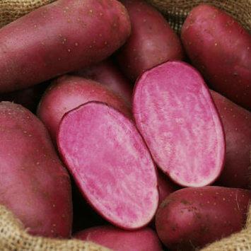 Seed Potato Heidi Red - Organic
