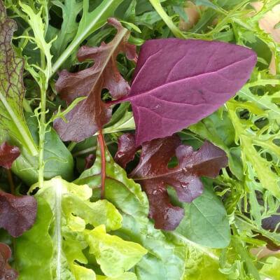 Flavour Flave Spicy Salad Mix