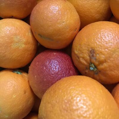 Organic Blood Oranges