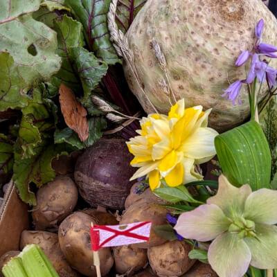 Organic Potatoes Jersey Royals