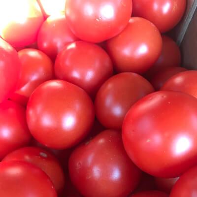 Organic Round Tomatoes