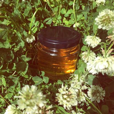 Clover Alternative To Honey