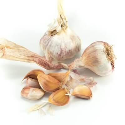Fresh European Garlic
