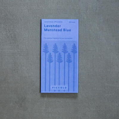 Seeds - Lavender Munstead Blue