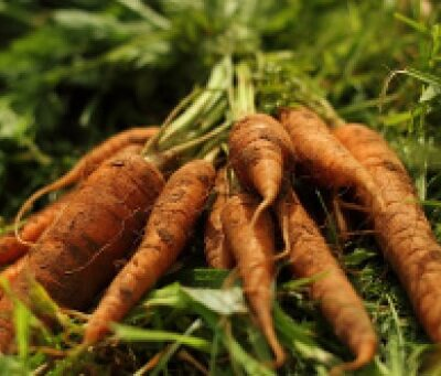 Organic Dirty Carrots - 1 Kg
