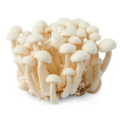 Shimeji  Organic Mushrooms Grown In Somerset