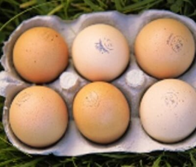 Organic Free Range Medium Eggs From Wiltshire