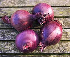 Organic Red Onions From Bagthorpe Farm Kent