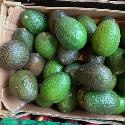 Organic Avocado Hass From Spain