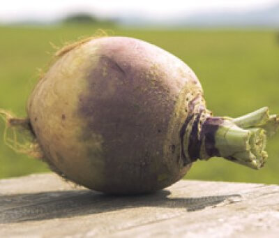 Organic Cornish Swede
