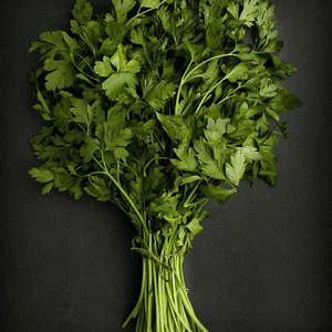 Organic Bunched Parsley From Lancashire