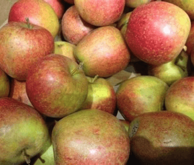 Organic Red Pippin Apples  From Uk