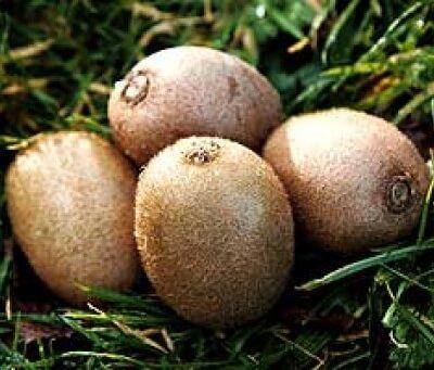 Italian Organic Kiwi Fruit