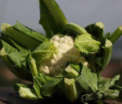 Organic Cornish Cauliflower