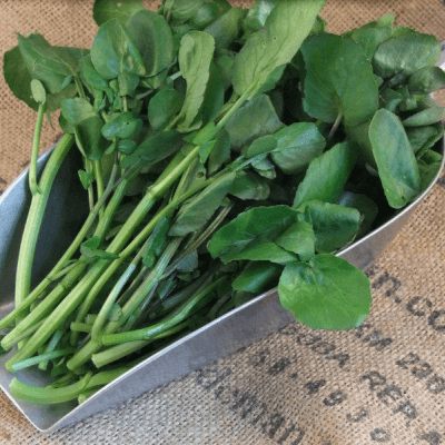 John Hurds Organic Watercress From Wiltshire
