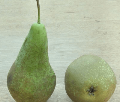 Organic Conference Pears From Uk