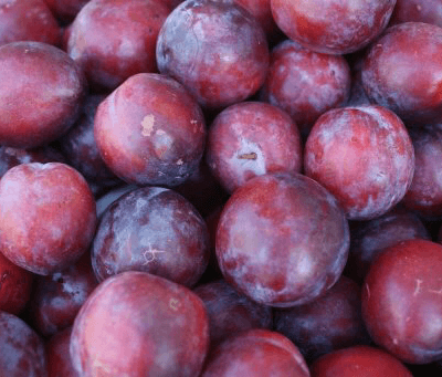 Organic Victoria Plums From The Uk