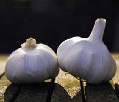 Organic Spanish Garlic