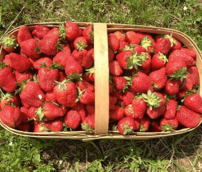 Organic Uk Strawberries