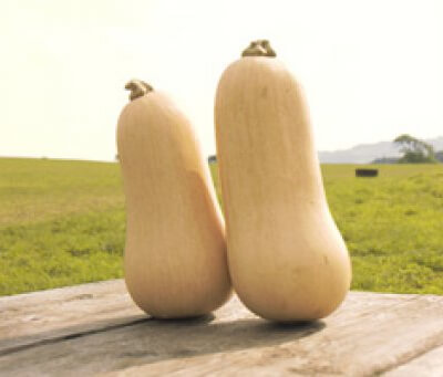 Organic Butternut Squash Grown In Spain