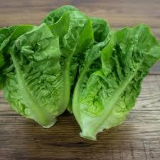 Organic Little Gem Lettuce From Lancashire
