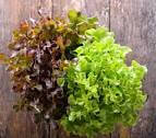Organic Mixed Lettuce