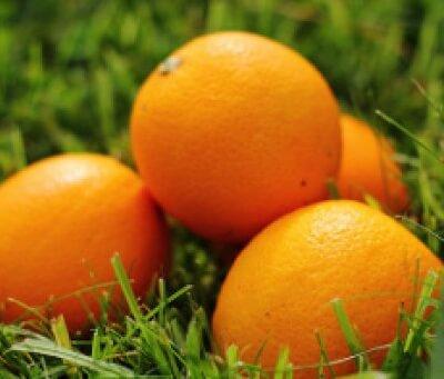 Organic Spanish  Navalina Oranges