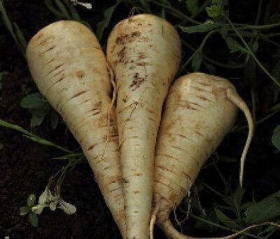 Organic Parsnips - 1 Kg