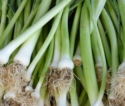Organic Spring Onions (Red)