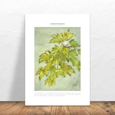Print Yellow-Browed Warbler