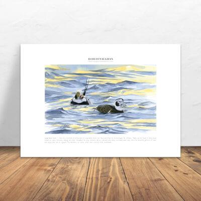 Print Long-Tailed Ducks