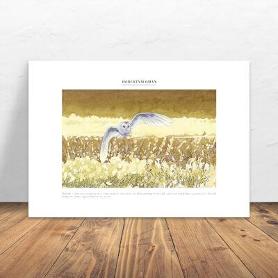 Print Barn Owl