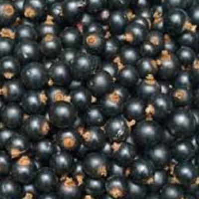 Blackcurrant Gelato