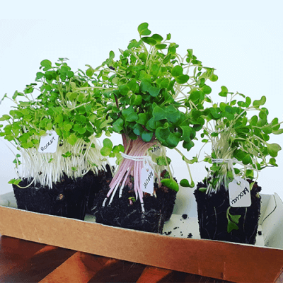 Microgreens Selection Box