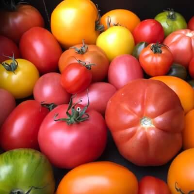 Heritage / Heirloom Tomatoes