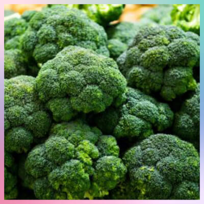 Large Head Of Lincolnshire Broccoli