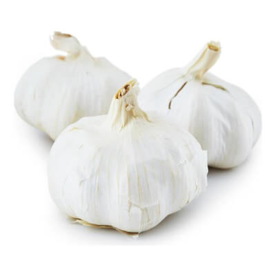 Large Garlic Bulb