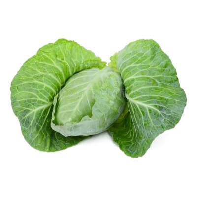 Hispi Pointed  Green  Cabbage