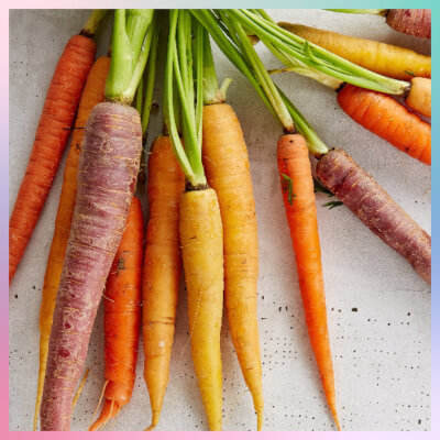 A Bunch Of Heritage Carrots / Rainbow Carrots